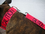 colour coded dog collar /leads/ harnesses staffordshire bull terrier german shepherd mastiff